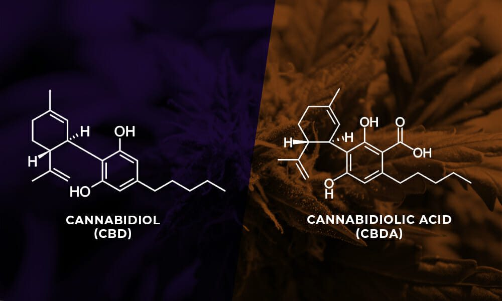 What is Cannabidiolic Acid (CBDa)