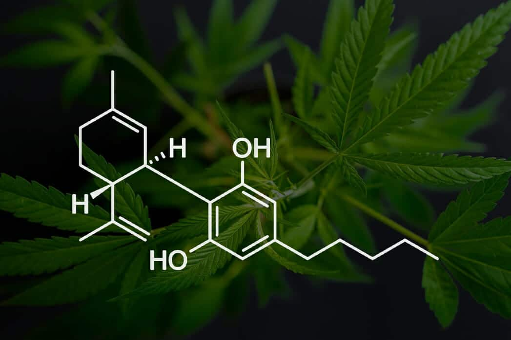 What is CBD and How Does It Work